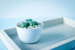 Cactus in a pot on wood table background. Cactus in a pot on a wooden table in blue Royalty Free Stock Images