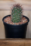 Cactus in pot on wooden box Royalty Free Stock Photos