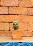 The cactus Stock Photo