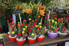 Cactus in pots in flower shop Royalty Free Stock Photo