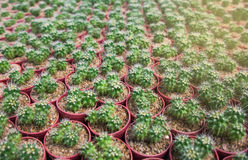 Cactus pots in the garden Royalty Free Stock Images