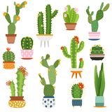 Cactus pots. Home plants cacti flowers in ceramic pot succulent plant, cactuses with prickles flora garden. Flat vector set vector illustration