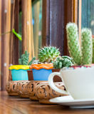 Cactus in pots place decorated near window. Royalty Free Stock Photography