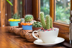 Cactus in pots place decorated near window. Stock Photography