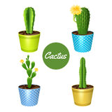 Cactus In Pots Set Stock Image