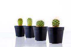 Cactus in pots Royalty Free Stock Photos