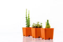 Cactus in pots Royalty Free Stock Photography