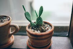 Cactus in pots on windowsill Royalty Free Stock Image