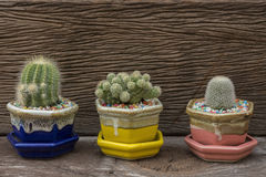 Cactus in the pots on the wood background.  royalty free stock image