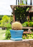 Cactus in pots on wooden deck Stock Image