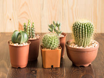 Cactus in Pots Stock Photos