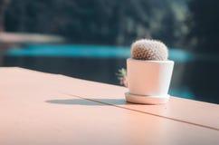 Cactus in potten wordt geplant die royalty-vrije stock foto's