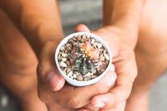 Cactus in potteninstallatie op handen Royalty-vrije Stock Foto's
