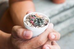 Cactus in potteninstallatie op handen Royalty-vrije Stock Foto