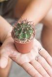 Cactus in potteninstallatie op handen Royalty-vrije Stock Afbeelding