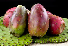 Cactus Prickly Pears. Royalty Free Stock Photo