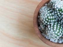 Cactus in put on a light brown wood table. Cactus in put on a light brown wood table Royalty Free Stock Photo