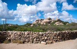 Cactus que crece en las formaciones de Ayo Rock Foto de archivo libre de regalías