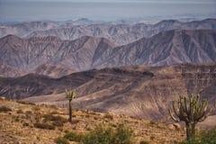 Cactus que crecen en las cuestas en los Andes imagen de archivo libre de regalías