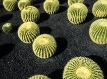 Cactus que crecen en un parque del cactus Imagenes de archivo