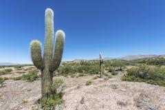 Free Cactus Quebrada De Humahuaca In Jujuy, Argentina. Stock Photography - 34245832