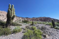 Cactus Quebrada de Humahuaca in Jujuy, Argentina. Royalty Free Stock Image