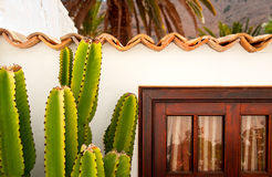 Cactus reaching rooftop Royalty Free Stock Image