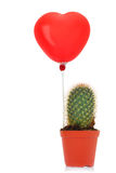 Cactus with read heart balloon Royalty Free Stock Photos