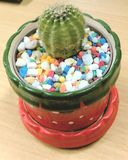 Cactus. In a red cup Stock Image