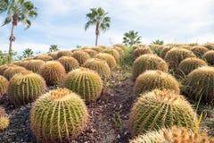 Cactus redondo 2 Foto de archivo