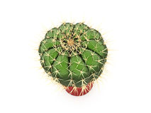 Cactus rendered isolated on white Royalty Free Stock Photo