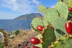 Cactus with ripe fruits on a background of Ayu-Dag mountain ,Crimea. Ayu-Dag mountain or Medved'-gora. View from the east on Partenit bay. Prickly pear cactus royalty free stock photography
