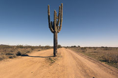 Cactus Road Arizona Stock Images