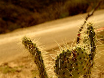 Cactus on Road Rally Royalty Free Stock Images
