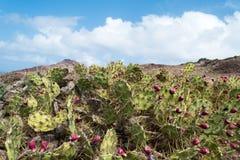 Cactus, roca y cielo imágenes de archivo libres de regalías