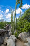 Cactus and rocks, Casibari Rock Formation Aruba, Carribean Sea Stock Photography
