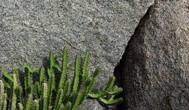 Cactus on the rocks Stock Photo