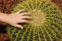 Cactus rond Photos libres de droits
