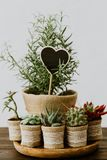 Cactus, rosemary and succulents in burlap stock images