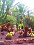 Cactus rossi e verdi Immagini Stock Libere da Diritti