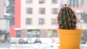 Cactus rosso della spina in vaso sulla caduta del davanzale e della neve della finestra all'aperto nell'orario invernale stock footage