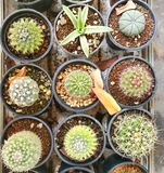 Cactus row. Group of cactus Royalty Free Stock Image
