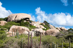 Cactus s'élevant sur les formations d'Ayo Rock Photo libre de droits