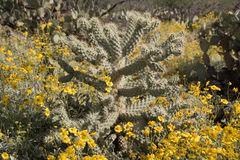 Cactus at Saguaro National Park, Arizona, USA Royalty Free Stock Photography