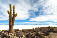 Cactus in Salar de Uyuni Stock Photos