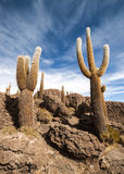 Cactus in Salar de Uyuni Stock Photo