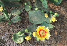 Cactus salvaje Imágenes de archivo libres de regalías