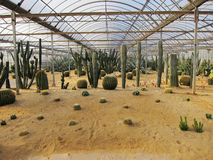 Cactus with sand in greenhouses. Cactus exhibition hall  in agricultural park Stock Photos