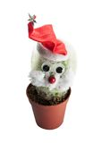 Cactus in Santa Claus hat. Isolated on a white background Stock Photos