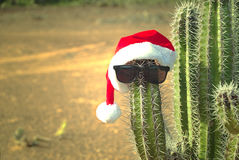 Cactus with a Santa hat Royalty Free Stock Photos